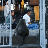 In Bali monkeys live among the people.