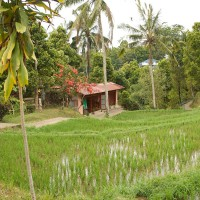 A cottage between the rice fields in Bali.