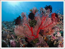 Discover the beautiful underwater world around Bali.