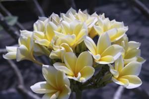 The beautiful flora of Bali.