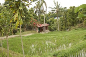 Typical house of Bali.