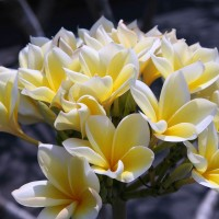In Bali you will find the most beautiful species of flowers.