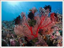 Discover the beautiful underwater world around Bali.