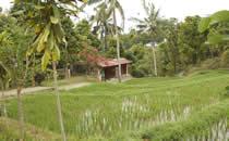 Visit to a Balinese village.