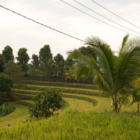The rice fields of Bali lie stepwise.