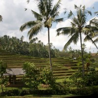 The rice fields in Bali look like stairs.